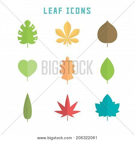 Leaf icons in flat style for your botany projects or nature publications.