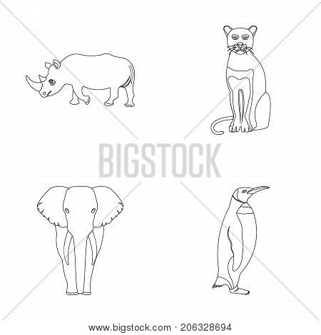 Black rhinoceros, panther wild cat, African animal elephant, imperial penguin. Wild animals set collection icons in outline style vector symbol stock illustration .