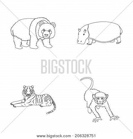 Bamboo bear, hippopotamus, wild animal tiger, monkey . Wild animal set collection icons in outline style vector symbol stock illustration .