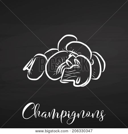 Vector Champignions Drawing On Chalkboard