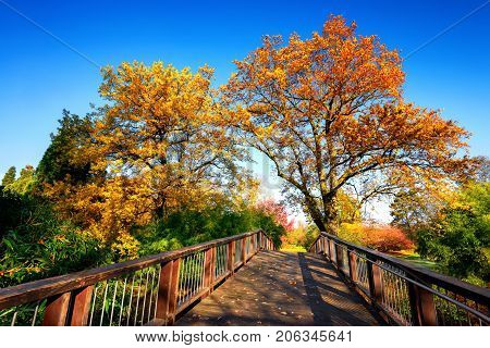 Wooden bridge in an idyllic autumn scene on a sunny day with deep blue sky and colorful trees
