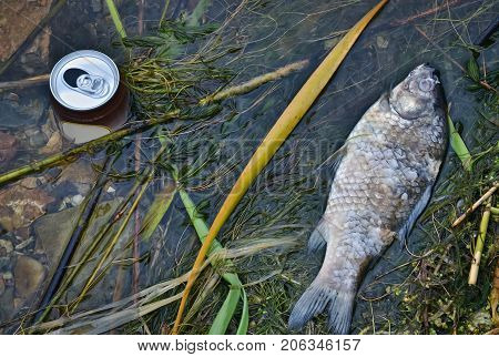 Closeup of a dead fish in the water due to the pollution