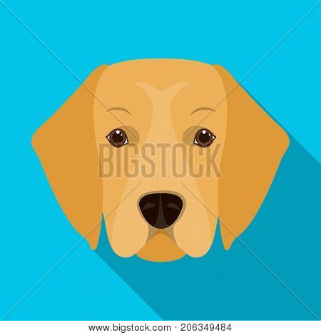 A dog breed, a golden retriever.Muzzle of the Golden Retriever single icon in flat style vector symbol stock illustration .
