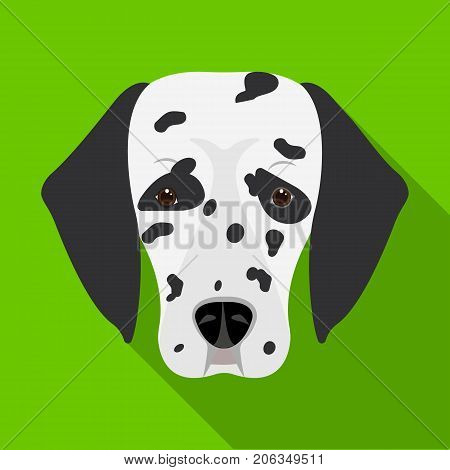 Dog breed, Dalmatian.Muzzle of a Dalmatian single icon in flat style vector symbol stock illustration .