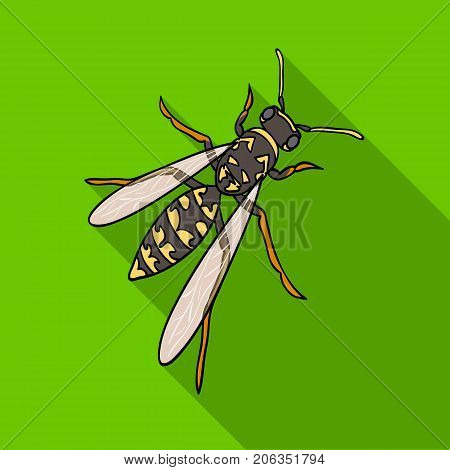 Wasp, hymenopteran insect.Wasp, stinging insect single icon in flat style vector symbol stock isometric illustration .