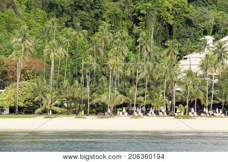 Landscape of tropical island. Palm tree on the beach.