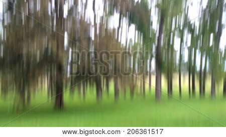 Blurred Trees by Green Meadow