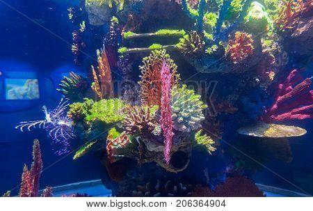 Plastic colorful decorative corals in new israel aquarium