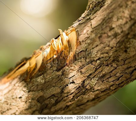 cuts with an ax on the bark of a tree .