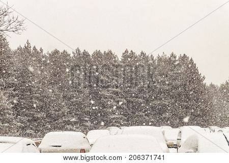 Winter landscape with standing snow-covered cars against the background of the forest during a heavy snowstorm. Bad weather.