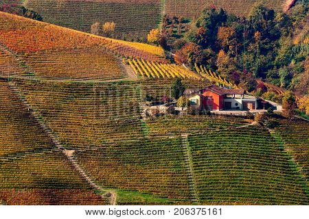 View of rural house among rows of colorful autumnal vineyards on the hill in Piedmont, Northern Italy.