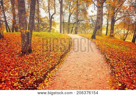 Autumn alley with fallen autumn leaves. Autumn landscape in cloudy weather. Deserted autumn park, cloudy autumn landscape. Lonely alley with fallen autumn leaves. Colorful autumn park. Autumn nature