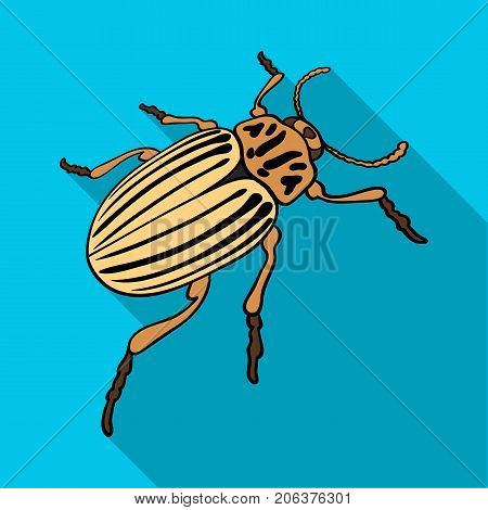 Colorado beetle, a coleopterous insect.Colorado, a harmful insect single icon in flat style vector symbol stock isometric illustration .