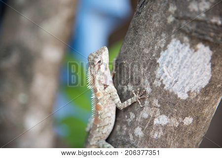 chameleon on the tree on nature background