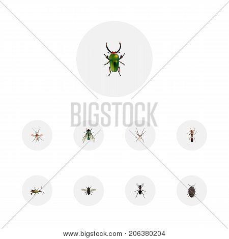 Realistic Emmet, Locust, Dor And Other Vector Elements