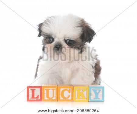 cute puppy behind block letters spelling name Lucky
