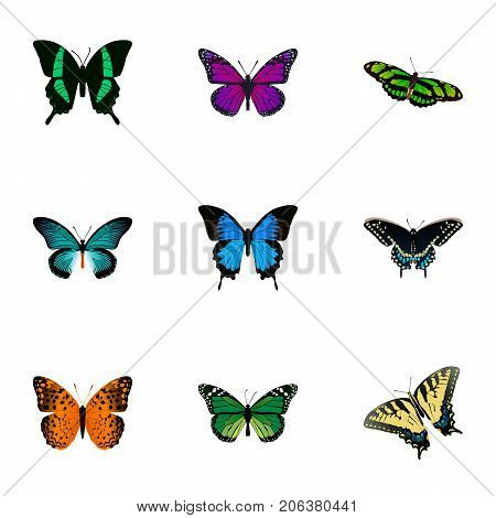 Realistic Purple Monarch, Green Peacock, Danaus Plexippus And Other Vector Elements