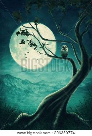 The big tree with owl