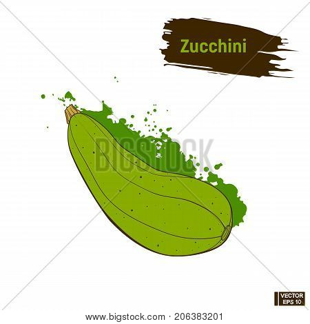 Sketch Of Zucchini. Useful Vegetables.