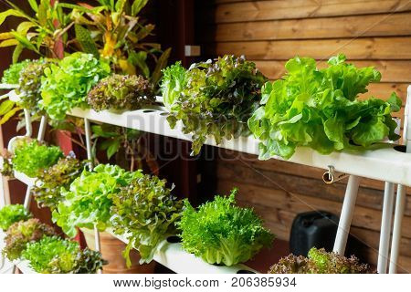 Hydroponic vegetables growing in greenhouse in thailand