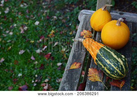 Striped Gourd And Two Yellow Ornamental Gourds