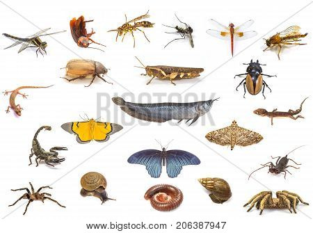 Set of animals isolated on white background insect fish and reptile