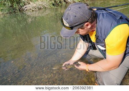 Fly fisherman releasing brown trout in river