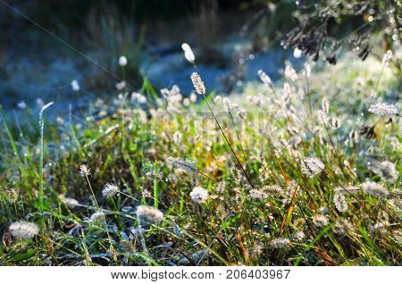 Morning dew, covering the frozen grass, slowly evaporates under the searing rays of the sun