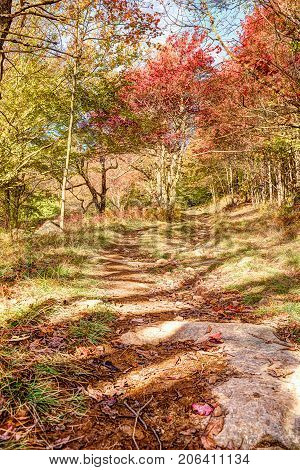 Trail Path In Autumn Forest On Hill Going Up In Dolly Sods, West Virginia