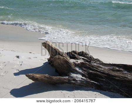 Driftwood at Pensacola FL beach after a storm