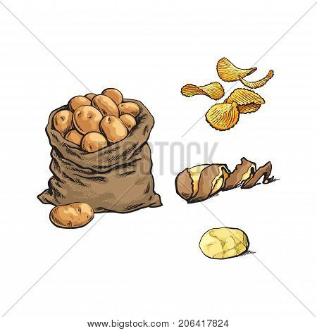 vector sketch cartoon ripe raw peeled yellow potato with spiral twisted peel, fluted chips and bag with potato set . Isolated illustration on a white background.