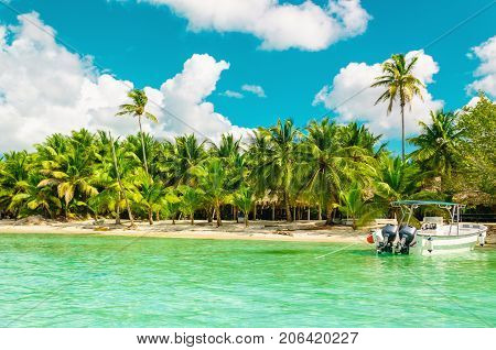 Amazing exotic coast of Dominican Republic with high palms, colorful boats and azure water, Dominican Republic, Caribbean Islands, Central America