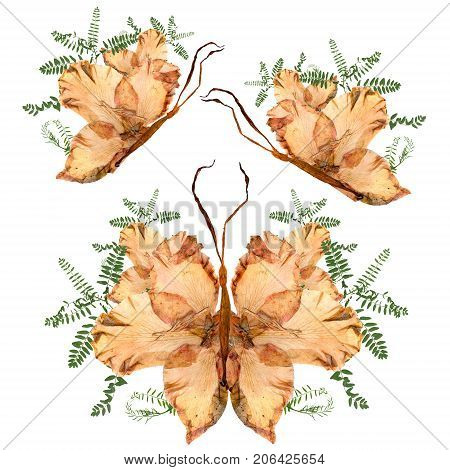 Floral Butterfly Made From Bizarre Curved Extruded Dried Lily Petals Drygladiolus  Flower