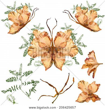 Floral Butterfly Made From Bizarre Curved Extruded Dried Lily Petals Dry Gladiolus Flower And Assemb