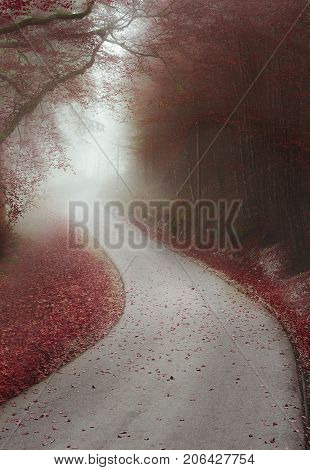 Autumn image with a red forest shrouded by mist and crossed by a road that seems limitless in Fussen Germany.