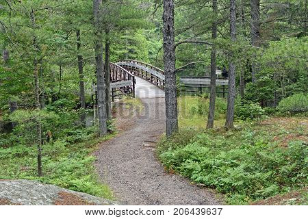 Remote Footbridge in the Forest in Chutes Provincial Park in Ontario