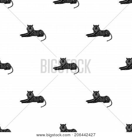 Tiger, a predatory animal. The Belgian tiger, a large wild cat single icon in black style vector symbol stock illustration .