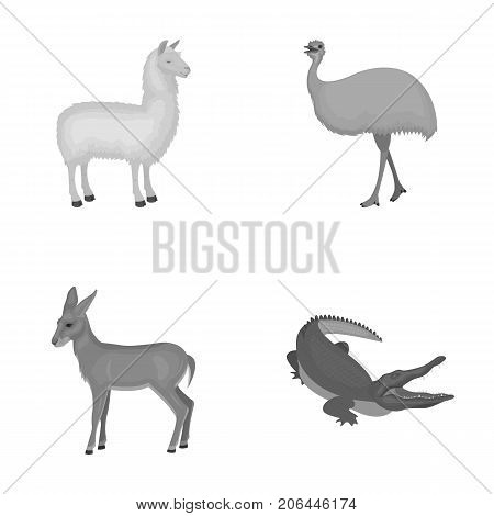 lama, ostrich emu, young antelope, animal crocodile. Wild animal, bird, reptile set collection icons in monochrome style vector symbol stock illustration .