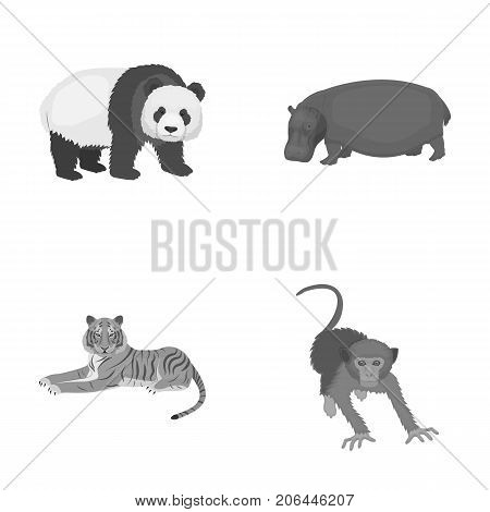 Bamboo bear, hippopotamus, wild animal tiger, monkey . Wild animal set collection icons in monochrome style vector symbol stock illustration .