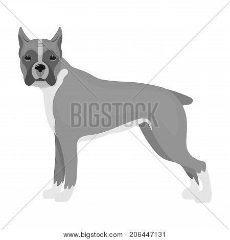 Boxer, single icon in monochrome style.Boxer, vector symbol stock illustration .