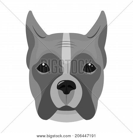 A dog, a breed of boxer.Muzzle of a boxer single icon in monochrome style vector symbol stock illustration .