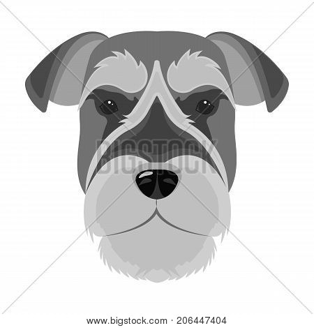 A breed of a dog, a risen schnauzer.Risen Schnauzer Muzzle single icon in monochrome style vector symbol stock illustration .