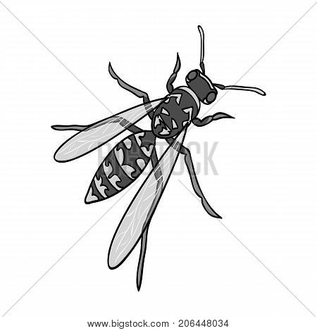 Wasp, hymenopteran insect.Wasp, stinging insect single icon in monochrome style vector symbol stock isometric illustration .