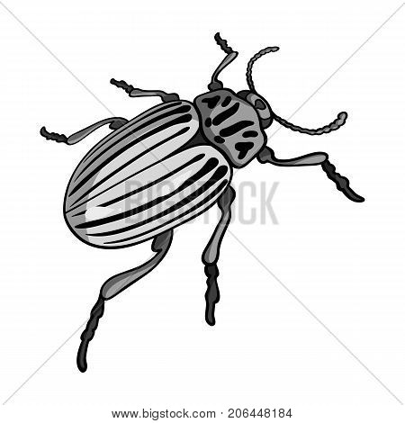 Colorado beetle, a coleopterous insect.Colorado, a harmful insect single icon in monochrome style vector symbol stock isometric illustration .