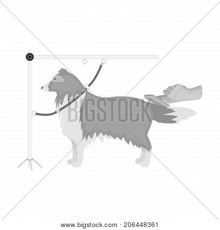 Combing a pet's fur, a dog in a stylish salon. Pet , dog care single icon in monochromt style vector symbol stock illustration .