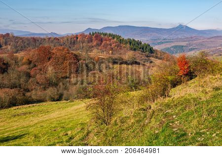 Autumn Forest With Red Foliage On Hillside