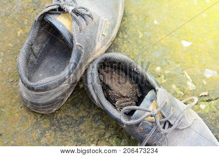 A Toad In An Old Safety Shoes On Dirty Cement Ground
