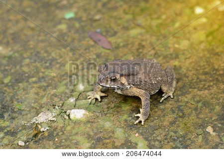 A Brown Toad On Rough And Dirty Cement Ground