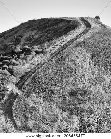 Country landscape between Riolo Terme and Brisighella (Ravenna Emilia Romagna Italy) at summer. Wiinding path. Black and white