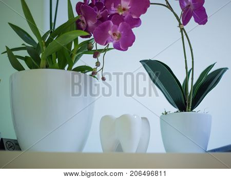 Dentist, Large Artificial Tooth With Root And Crown, Dental Office